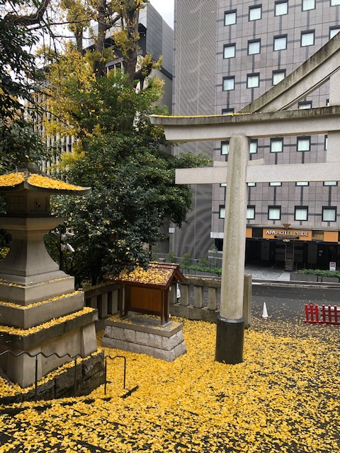 日枝神社 イチョウ